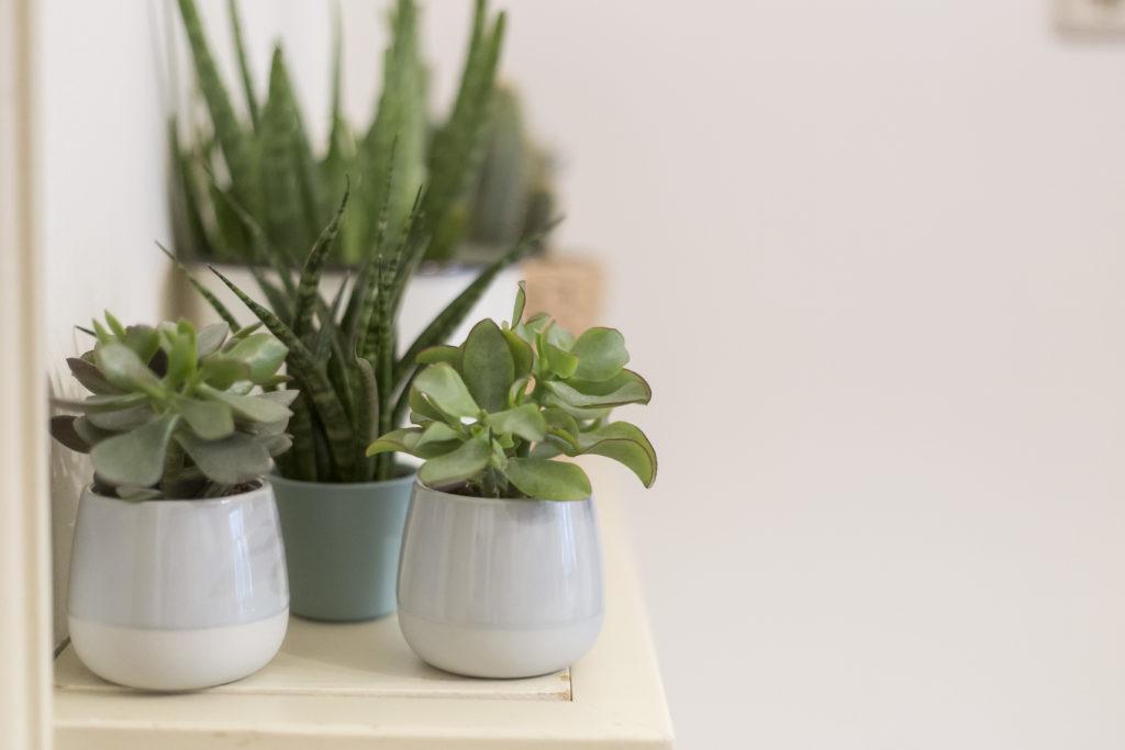 Allerlei groene planten en potten in vergaderruimte de salon in den bosch