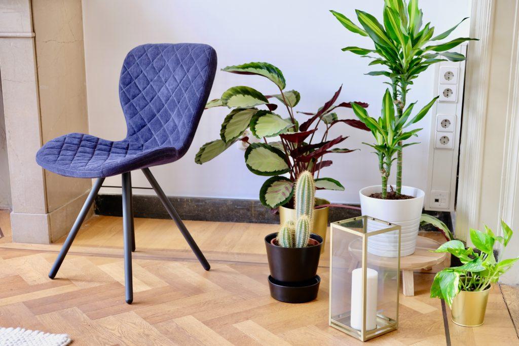 Planten en blauwe stoel en wit kleed en houten parket vloer in zitruimte vergaderruimte de salon in den bosch met wifi
